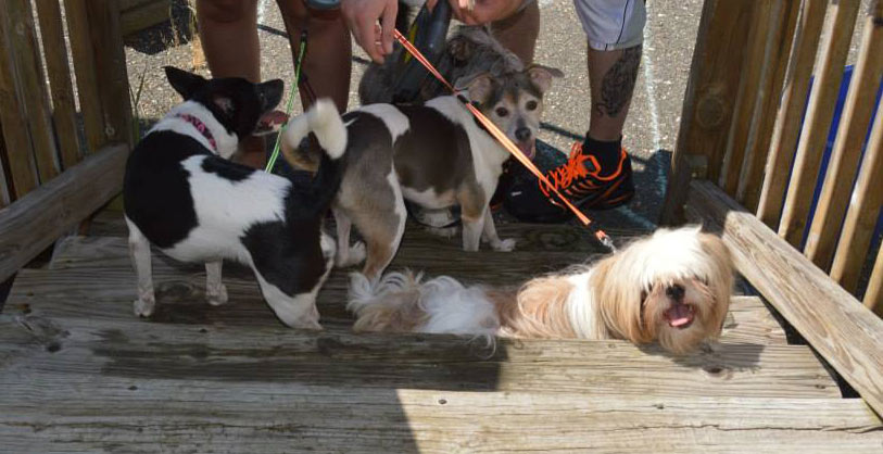 Group of dogs headed into SPCA/HS shots.