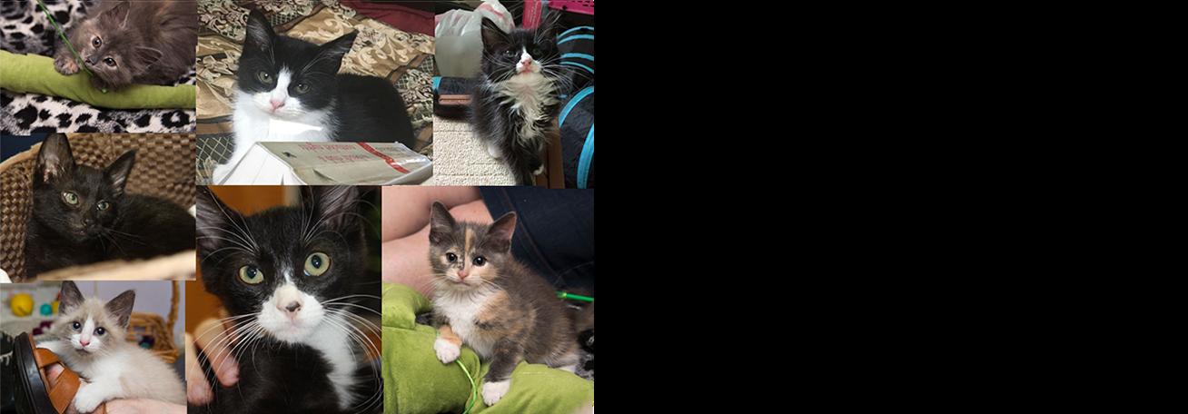 kitten mashup slider