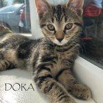 Dora. I'm pending!