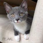 Pearl. I'm adopted!