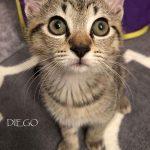 Diego. I'm adopted!